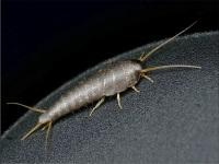 Чешуйница в ванной комнате – эффективные методы борьбы с насекомыми