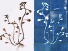 Растительный узор на плитке