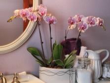Уход за растениями в ванной комнате без окна