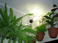 Подсветка для растений в ванной комнате