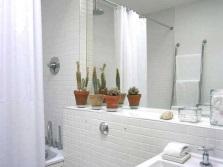 Правила ухода за растениями в ванной без окна