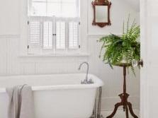 Папоротник для ванной комнаты с окном