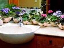 Фиалки для ванной без окна