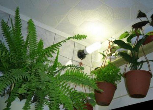 фитолампы для растений своими руками видео