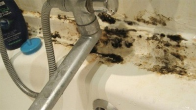 Черный грибок в ванной комнате
