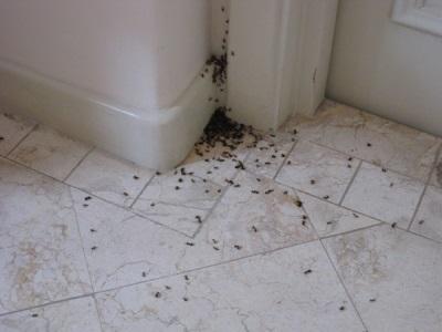 Насекомые в ванной комнате