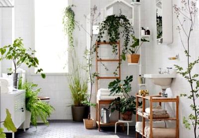 Размещение горшечных цветов и других растений в ванной комнате